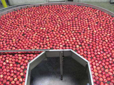 Apple Packing process