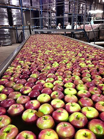 line_apples